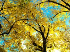 Peachtree Corners Home Maintenance Autumn Leaves